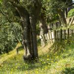 Villa Moni Garden