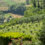 Villa Moni Pesaro view